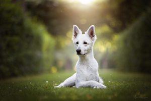 Verhaltensberatung der Tierarztpraxis für Tierverhaltenstherapie u. Tierpsychologie