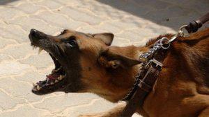 Einfluss der Fütterung auf Aggression von Hunden